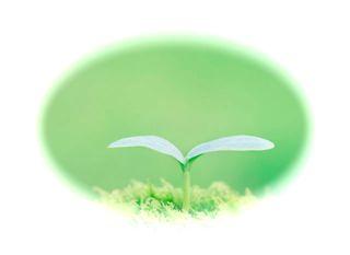 新しい植物の芽