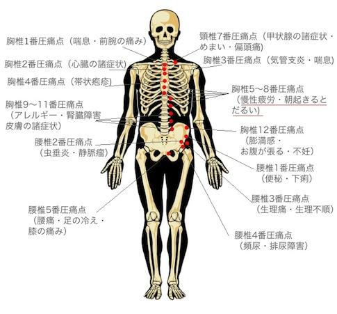 身体の前面に出る背骨の圧痛点