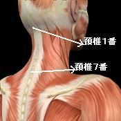 頚椎の位置の目安
