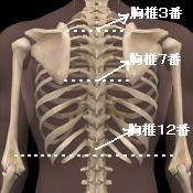 胸椎の位置の目安
