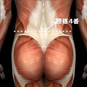 腰椎の位置の目安